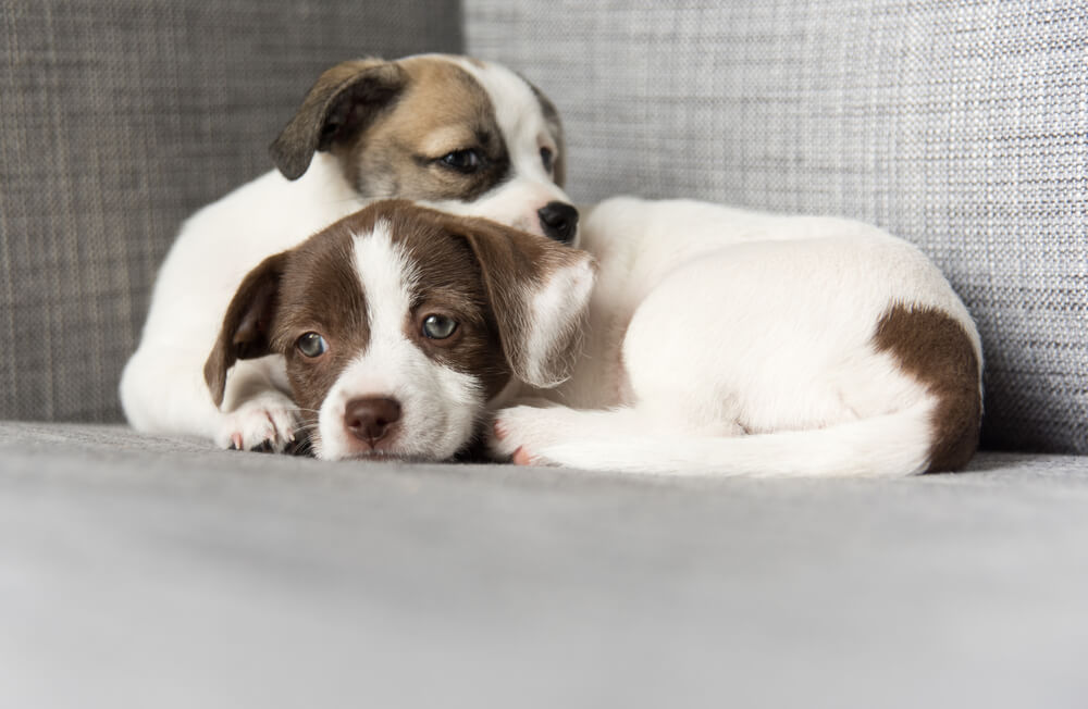 How To Puppy Proof Your Apartment