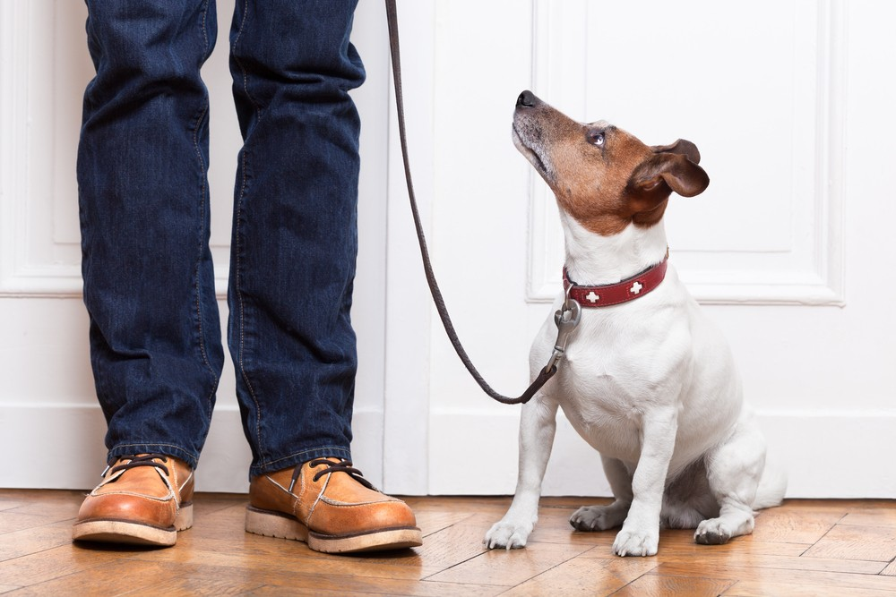 Best Apps To Use When You Don't Want To Leave Your Apartment | Dog Walker App
