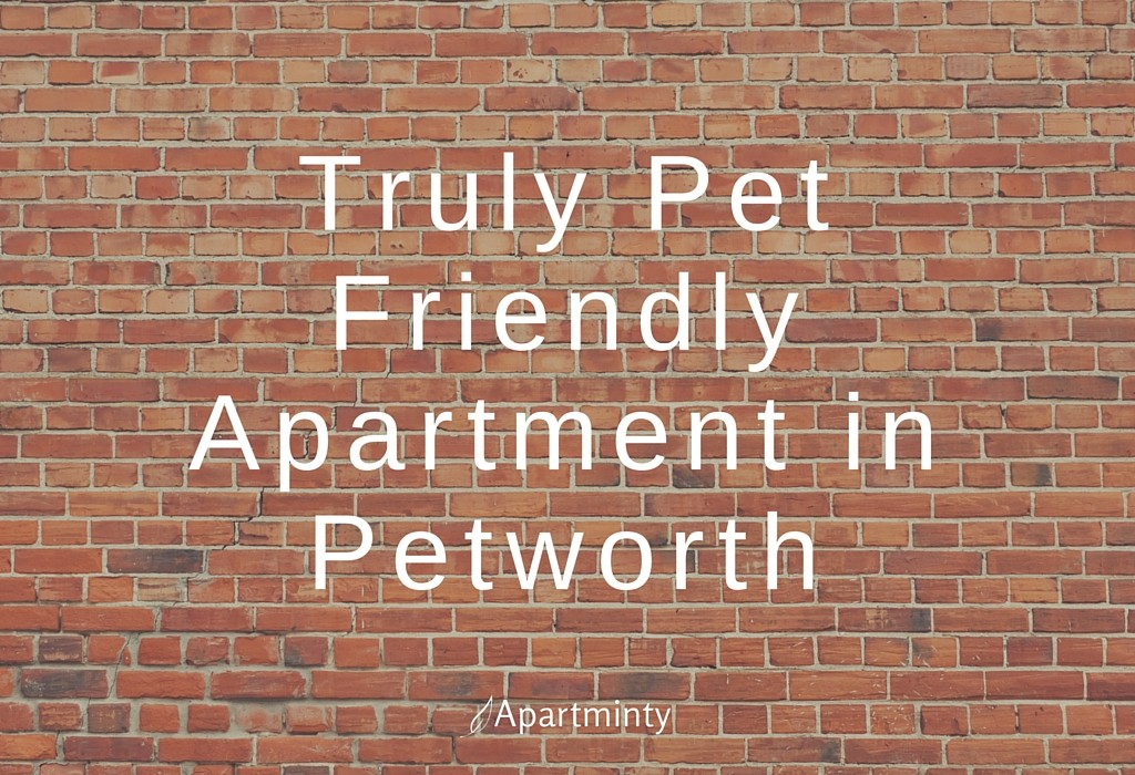 Truly Pet Friendly Apartment in Petworth