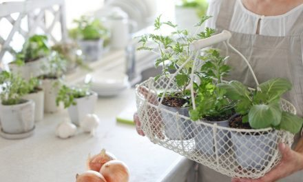 Apartminty Fresh Picks: Herb Garden Essentials For The Apartment Gardener