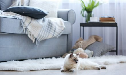 Pinspiration: Cozy Up With This Fall Apartment Decor Inspiration