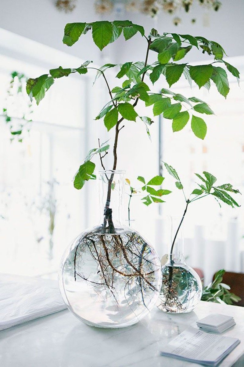 ... Greenery  Decorating Your Apartment  Decorating With House Plants