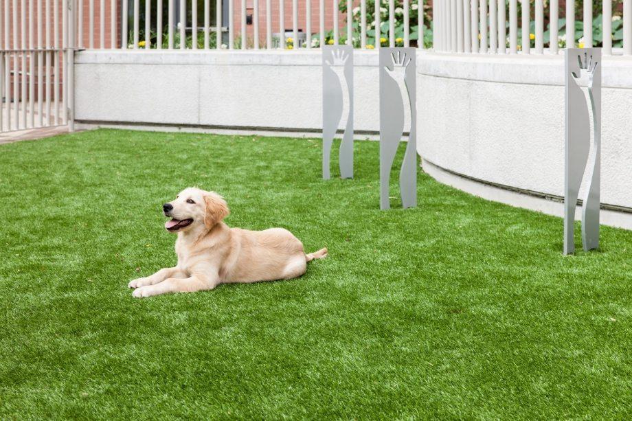 Camden Noma Apartments In Washington Dc Dog Run