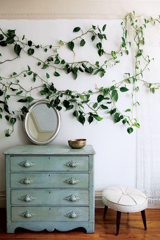 Spring Decor Trends   Indoor Climbing Plants