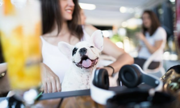 The Best Dog-Friendly Restaurants DC Has To Offer