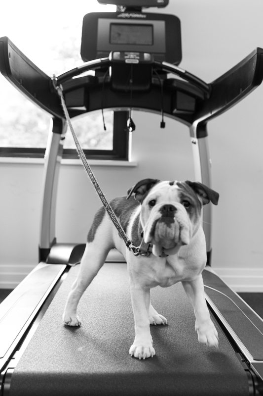 2m-street-puppy-emmy-treadmill-washingotn-dc-apartments
