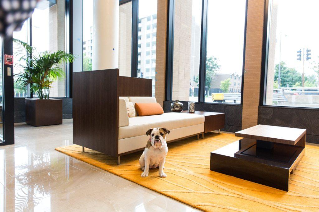 pet-friendly-dc-apartments-2m-street-apartments-noma