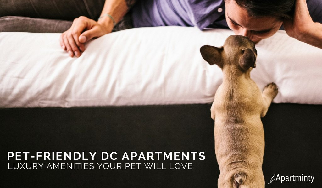 Pet-Friendly DC Apartments | Luxury Amenities Your Dog Will Love