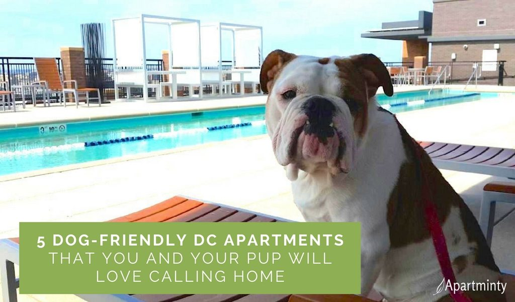 5 DC Dog-Friendly Apartment Buildings