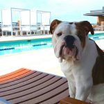 Best Dog Friendly Apartments in DC