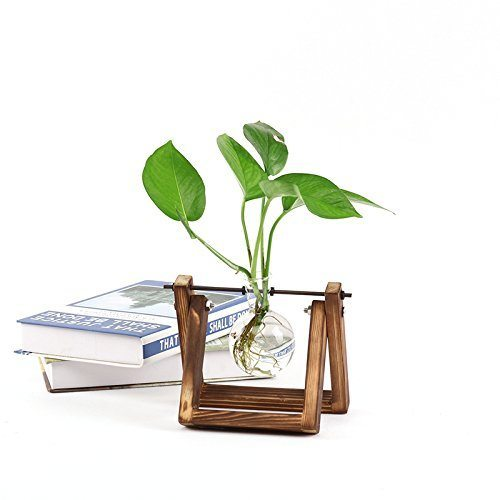 Desk Accessories | Desktop Glass Bulb Hydroponic Planter