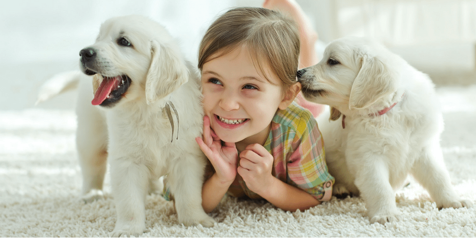 Summer Moving TIps | Moving With Pets | Moving With Kids
