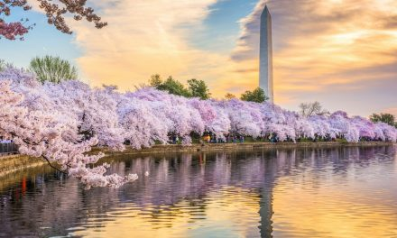 5 Can't Miss DC March Events
