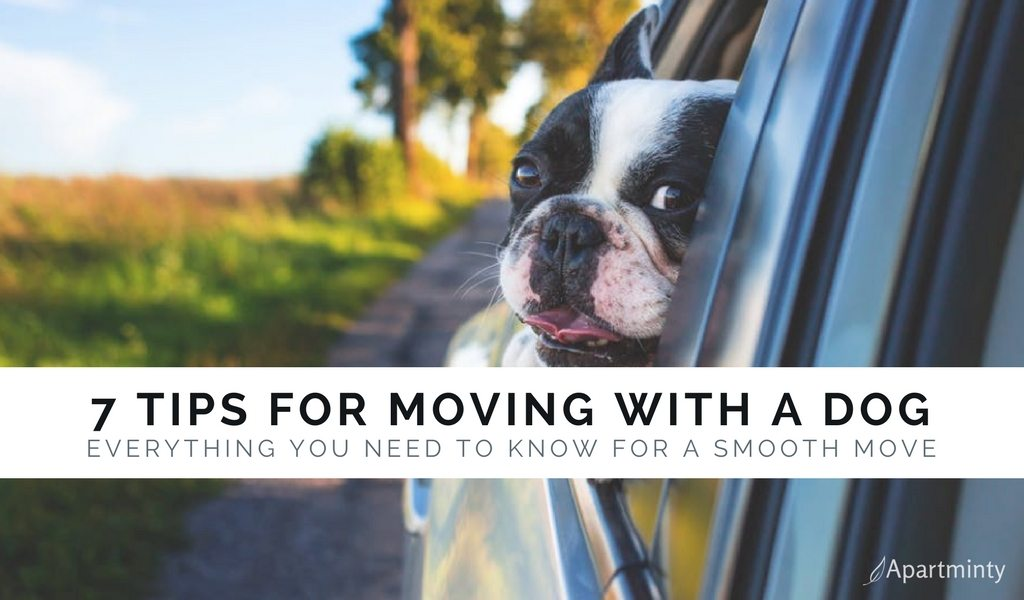 7 Tips For Moving With A Dog