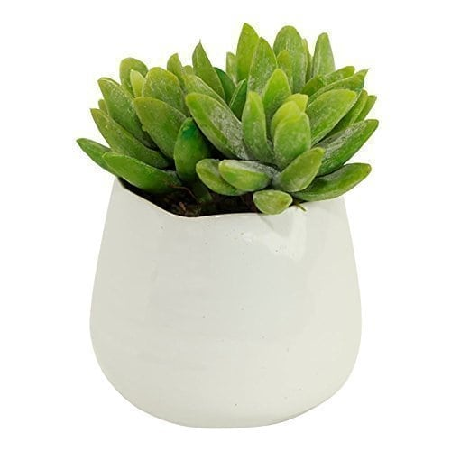 Decorating With Faux Plants | Faux Succulent Trio In White Ceramic Pots